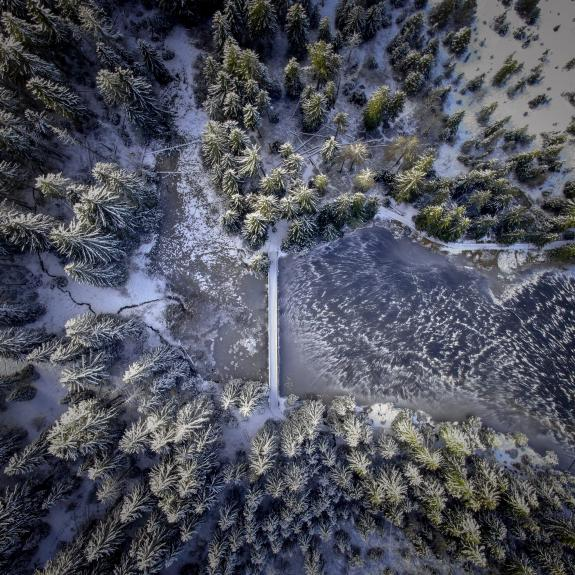 Frozen forest from above